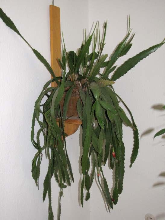 Seramis vs Hydrokultur u2013 Wo liegt der Unterschied? Pflanzen& Botanik GREEN24 Hilfe Pflege  ~ 01163053_Unterschied Sukkulente Xerophyten